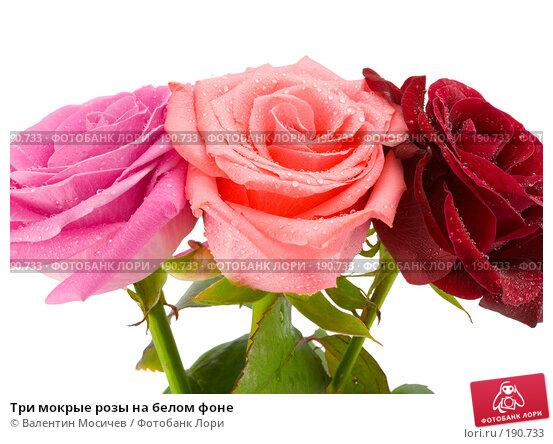 Три мокрые розы на белом фоне, фото № 190733, снято 3 марта 2007 г. (c) Валентин Мосичев / Фотобанк Лори
