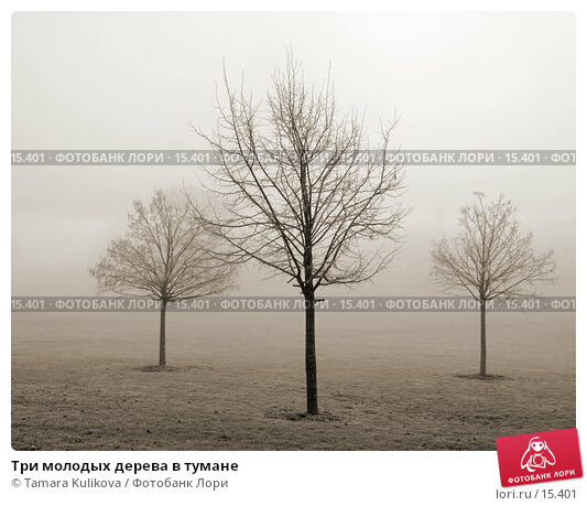 Купить «Три молодых дерева в тумане», фото № 15401, снято 19 декабря 2006 г. (c) Tamara Kulikova / Фотобанк Лори
