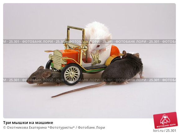 Три мышки на машине, эксклюзивное фото № 25301, снято 18 марта 2007 г. (c) Охотникова Екатерина *Фототуристы* / Фотобанк Лори