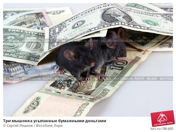 Три мышонка усыпанные бумажными деньгами, фото № 88665, снято 25 февраля 2017 г. (c) Сергей Лешков / Фотобанк Лори