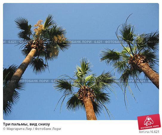 Три пальмы, вид снизу, фото № 6621, снято 4 июля 2006 г. (c) Маргарита Лир / Фотобанк Лори