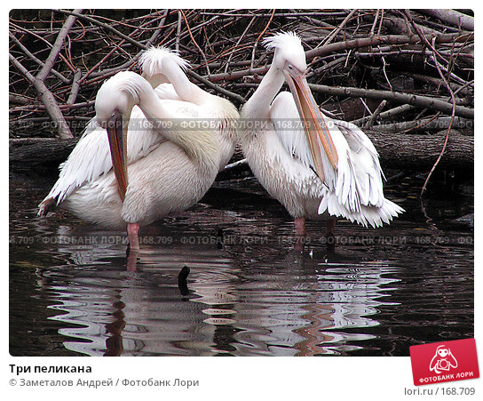 Три пеликана, фото № 168709, снято 22 октября 2004 г. (c) Заметалов Андрей / Фотобанк Лори
