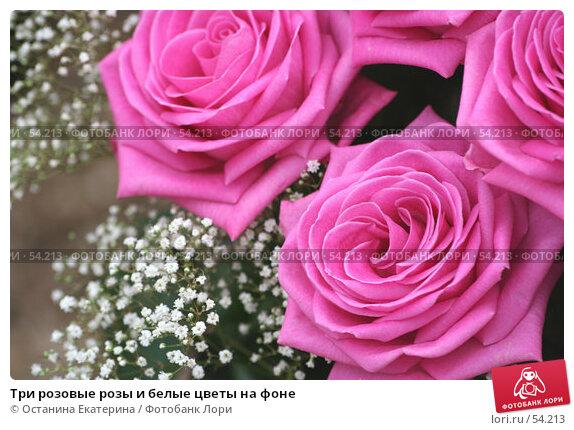 Три розовые розы и белые цветы на фоне, фото № 54213, снято 19 февраля 2007 г. (c) Останина Екатерина / Фотобанк Лори