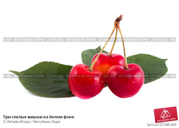 Купить «Три спелые вишни на белом фоне», фото № 27545433, снято 9 июня 2013 г. (c) Литвяк Игорь / Фотобанк Лори