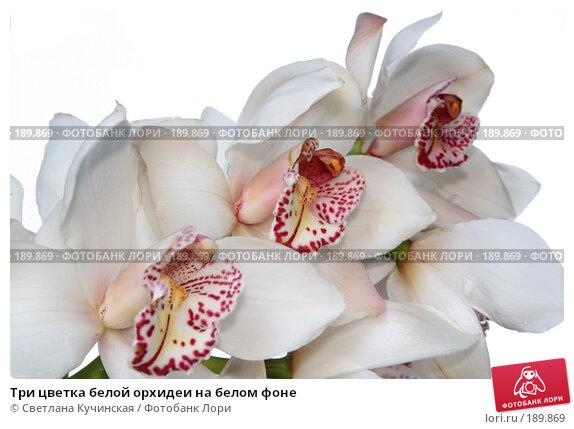 Три цветка белой орхидеи на белом фоне, фото № 189869, снято 8 декабря 2016 г. (c) Светлана Кучинская / Фотобанк Лори