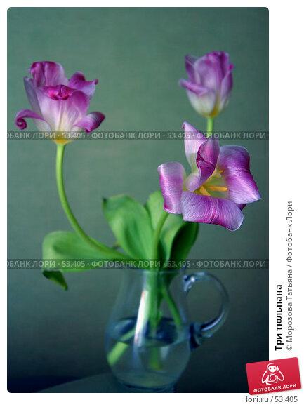 Три тюльпана, фото № 53405, снято 8 марта 2006 г. (c) Морозова Татьяна / Фотобанк Лори