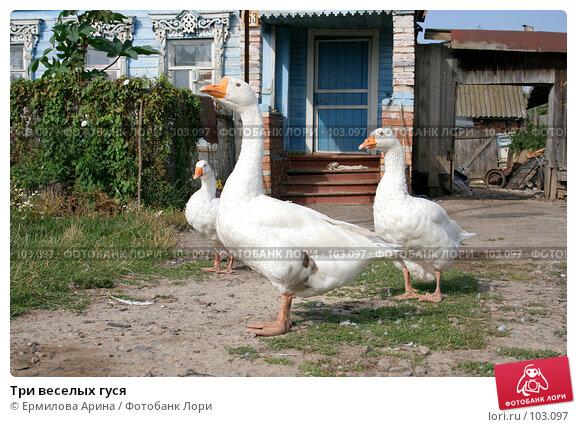 Купить «Три веселых гуся», фото № 103097, снято 17 марта 2018 г. (c) Ермилова Арина / Фотобанк Лори