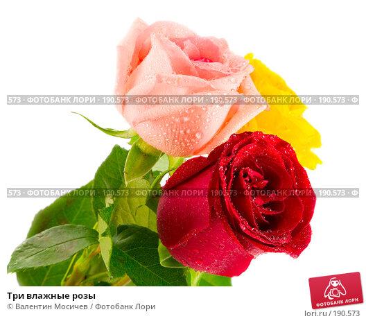 Три влажные розы, фото № 190573, снято 16 февраля 2007 г. (c) Валентин Мосичев / Фотобанк Лори