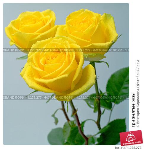 Желтые розы  букет  Розы  поздравительные открытки