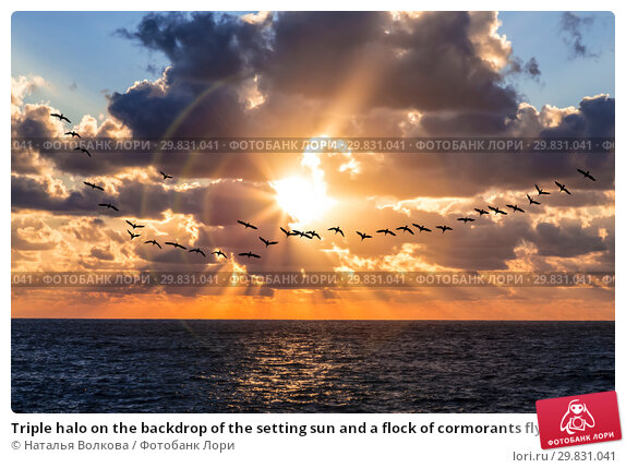 Купить «Triple halo on the backdrop of the setting sun and a flock of cormorants flying», фото № 29831041, снято 2 декабря 2015 г. (c) Наталья Волкова / Фотобанк Лори