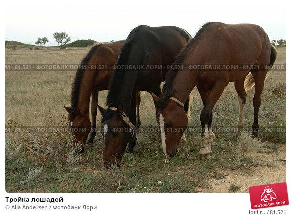 Купить «Тройка лошадей», фото № 81521, снято 24 сентября 2006 г. (c) Alla Andersen / Фотобанк Лори
