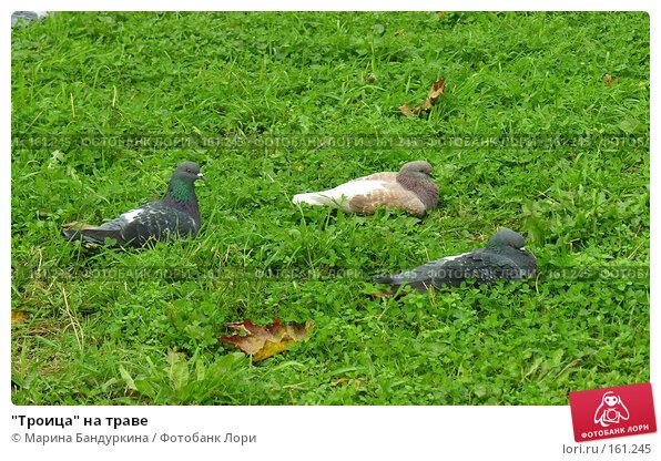 """""""Троица"""" на траве, фото № 161245, снято 8 октября 2006 г. (c) Марина Бандуркина / Фотобанк Лори"""