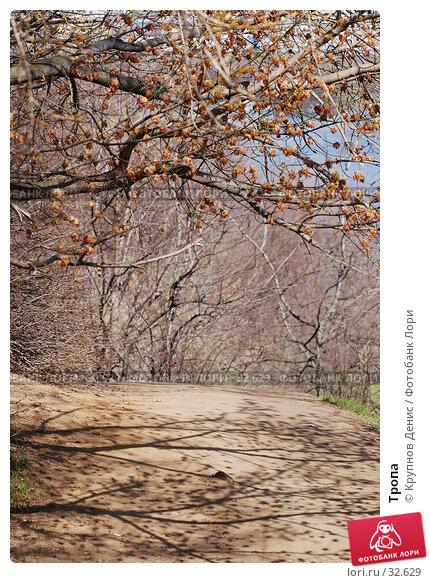 Тропа, фото № 32629, снято 14 марта 2007 г. (c) Крупнов Денис / Фотобанк Лори