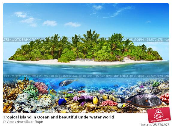 Купить «Tropical island in Ocean and beautiful underwater world», фото № 25570973, снято 17 января 2016 г. (c) Vitas / Фотобанк Лори