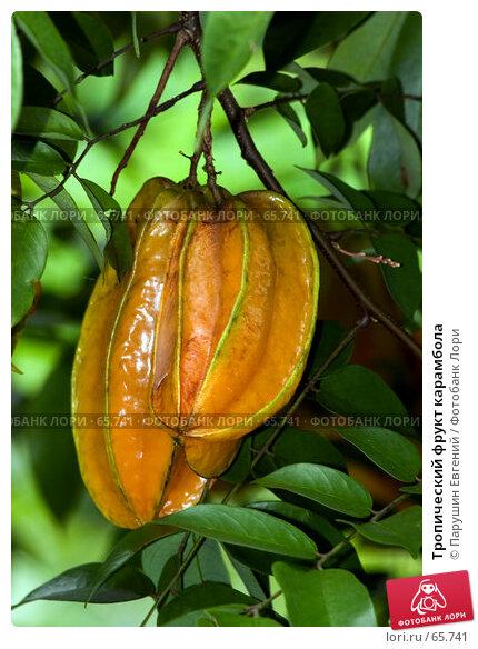 Купить «Тропический фрукт карамбола», фото № 65741, снято 20 марта 2018 г. (c) Парушин Евгений / Фотобанк Лори
