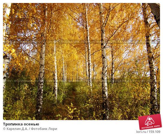 Тропинка осенью, фото № 159109, снято 19 октября 2007 г. (c) Карелин Д.А. / Фотобанк Лори
