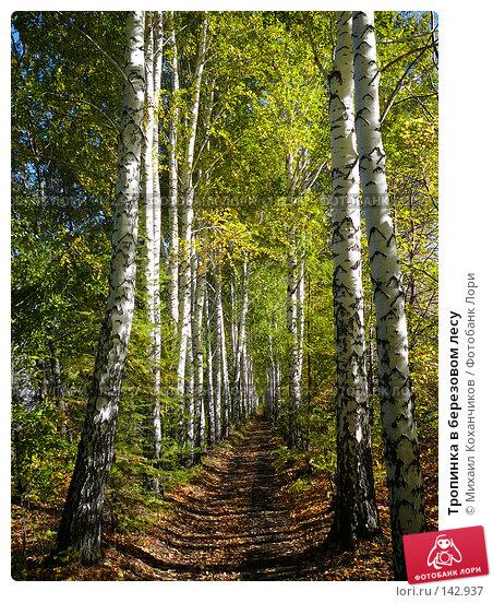 Тропинка в березовом лесу, фото № 142937, снято 30 сентября 2007 г. (c) Михаил Коханчиков / Фотобанк Лори