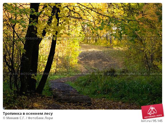 Тропинка в осеннем лесу, фото № 95145, снято 21 июля 2017 г. (c) Минаев С.Г. / Фотобанк Лори