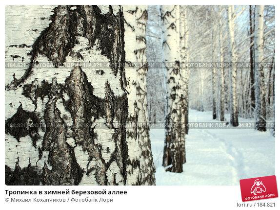 Тропинка в зимней березовой аллее, фото № 184821, снято 8 января 2008 г. (c) Михаил Коханчиков / Фотобанк Лори