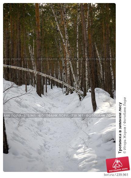 Тропинка в зимнем лесу, фото № 239961, снято 12 февраля 2008 г. (c) Игорь Жоров / Фотобанк Лори