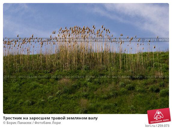 Тростник на заросшем травой земляном валу, фото № 259073, снято 19 апреля 2008 г. (c) Борис Панасюк / Фотобанк Лори