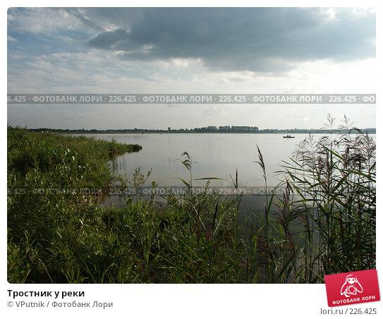 Тростник у реки, фото № 226425, снято 20 августа 2006 г. (c) VPutnik / Фотобанк Лори