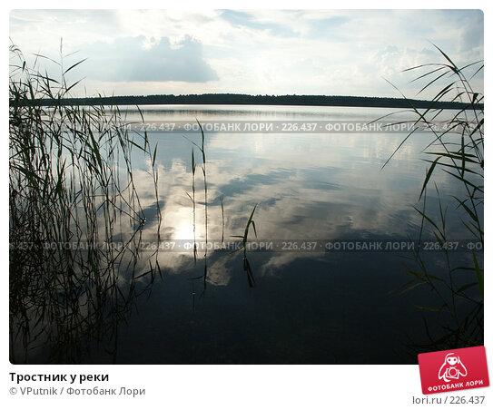 Тростник у реки, фото № 226437, снято 20 августа 2006 г. (c) VPutnik / Фотобанк Лори