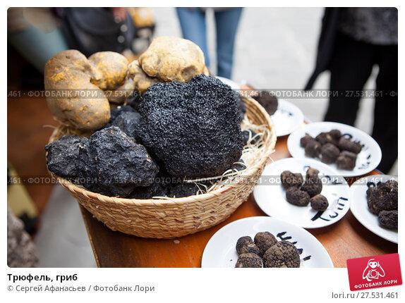 Купить «Трюфель, гриб», фото № 27531461, снято 7 мая 2014 г. (c) Сергей Афанасьев / Фотобанк Лори