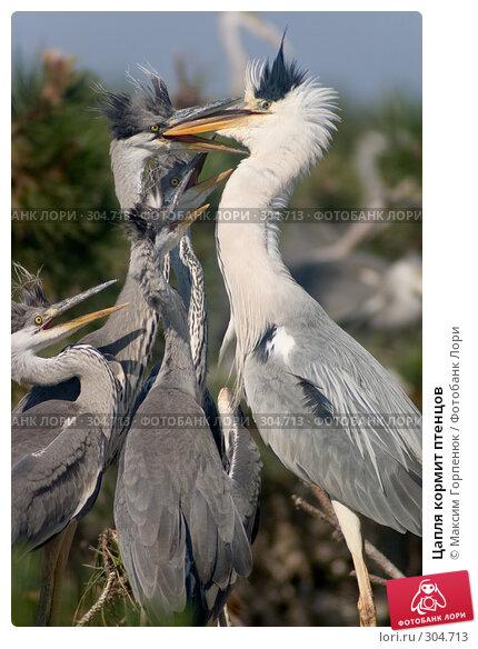 Цапля кормит птенцов, фото № 304713, снято 17 июня 2005 г. (c) Максим Горпенюк / Фотобанк Лори