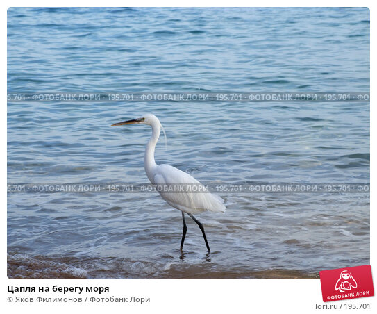 Цапля на берегу моря, фото № 195701, снято 19 января 2008 г. (c) Яков Филимонов / Фотобанк Лори
