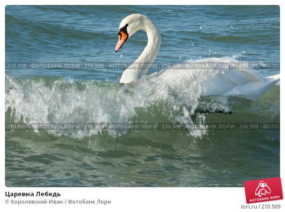 Купить «Царевна Лебедь», фото № 210509, снято 24 февраля 2008 г. (c) Королевский Иван / Фотобанк Лори