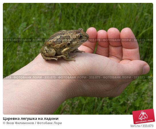 Царевна лягушка на ладони, фото № 333073, снято 22 июня 2008 г. (c) Яков Филимонов / Фотобанк Лори