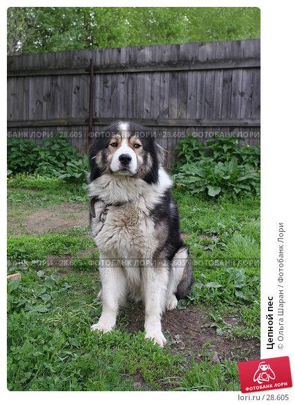Цепной пес, фото № 28605, снято 25 мая 2006 г. (c) Ольга Шаран / Фотобанк Лори