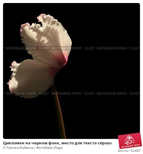 Купить «Цикламен на черном фоне, место для текста справа», фото № 12657, снято 9 ноября 2006 г. (c) Tamara Kulikova / Фотобанк Лори