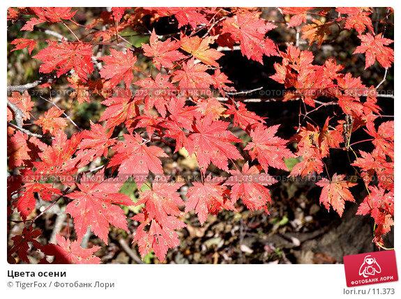 Цвета осени, фото № 11373, снято 21 октября 2006 г. (c) TigerFox / Фотобанк Лори