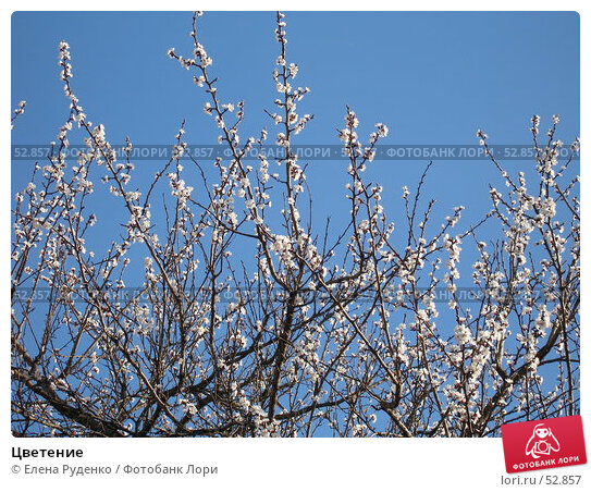 Цветение, фото № 52857, снято 8 апреля 2007 г. (c) Елена Руденко / Фотобанк Лори