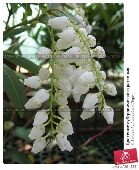 Цветение субтропического растения, фото № 261533, снято 12 апреля 2008 г. (c) Заноза-Ру / Фотобанк Лори
