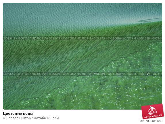 Цветение воды, фото № 308649, снято 6 августа 2007 г. (c) Павлов Виктор / Фотобанк Лори