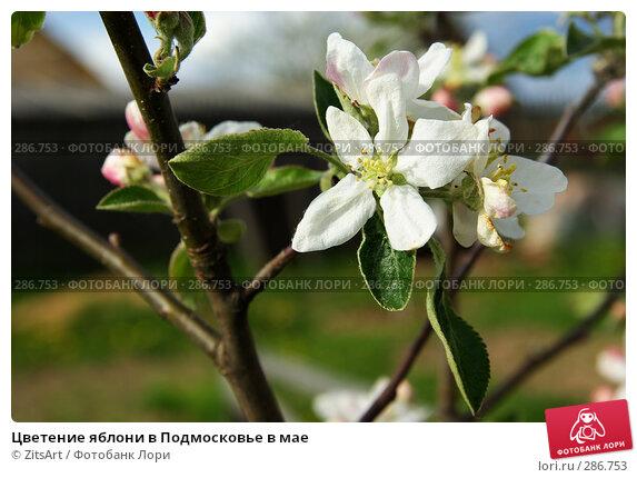 Цветение яблони в Подмосковье в мае, фото № 286753, снято 15 мая 2008 г. (c) ZitsArt / Фотобанк Лори