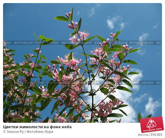 Цветки жимолости на фоне неба, фото № 310501, снято 31 мая 2008 г. (c) Заноза-Ру / Фотобанк Лори
