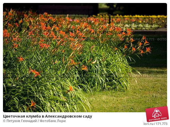 Цветочная клумба в Александровском саду, фото № 171773, снято 23 июня 2007 г. (c) Петухов Геннадий / Фотобанк Лори