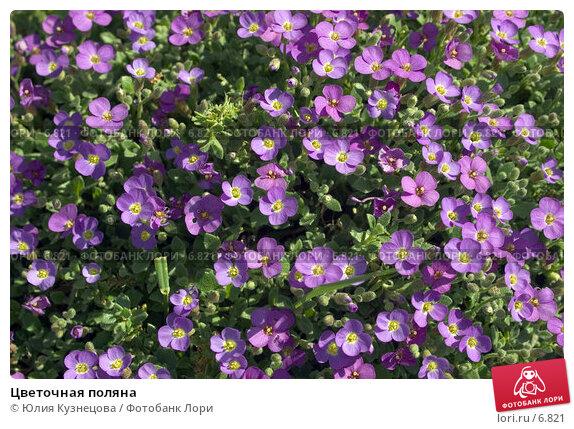Купить «Цветочная поляна», эксклюзивное фото № 6821, снято 20 апреля 2018 г. (c) Юлия Кузнецова / Фотобанк Лори