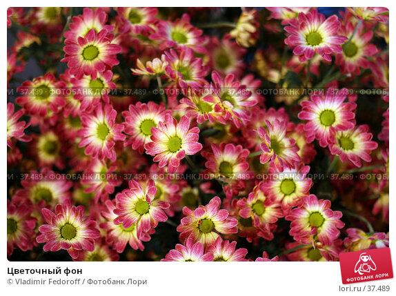 Купить «Цветочный фон», фото № 37489, снято 26 апреля 2007 г. (c) Vladimir Fedoroff / Фотобанк Лори