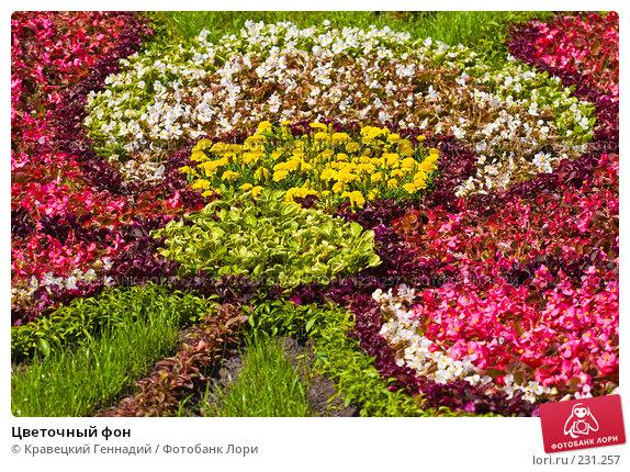 Купить «Цветочный фон», фото № 231257, снято 28 августа 2005 г. (c) Кравецкий Геннадий / Фотобанк Лори