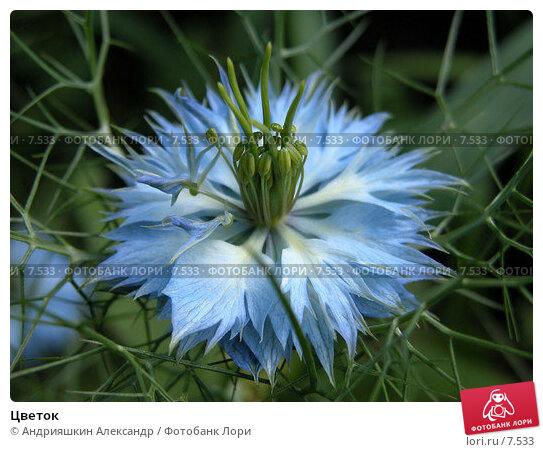 Цветок, фото № 7533, снято 18 июля 2004 г. (c) Андрияшкин Александр / Фотобанк Лори