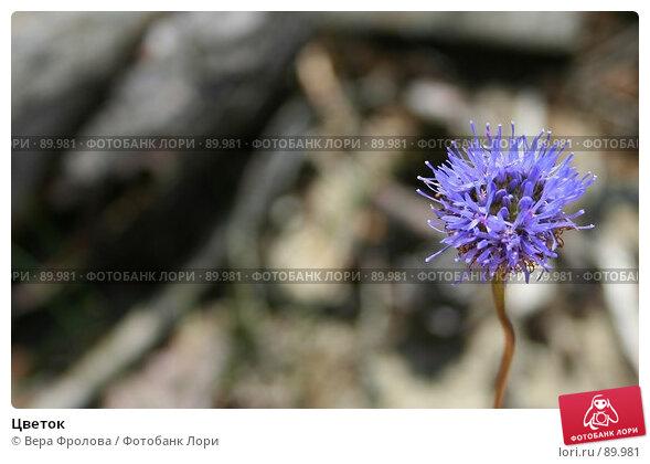Цветок, фото № 89981, снято 23 июня 2007 г. (c) Вера Фролова / Фотобанк Лори