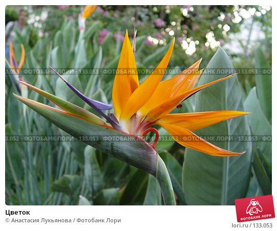 Цветок, фото № 133053, снято 29 августа 2005 г. (c) Анастасия Лукьянова / Фотобанк Лори