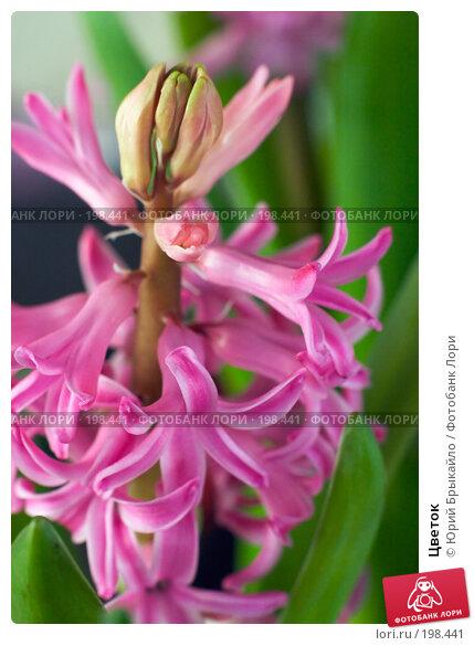 Купить «Цветок», фото № 198441, снято 3 февраля 2008 г. (c) Юрий Брыкайло / Фотобанк Лори
