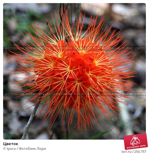 Цветок, фото № 250757, снято 29 марта 2008 г. (c) tyuru / Фотобанк Лори