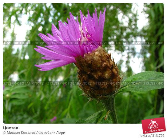 Цветок, фото № 313729, снято 30 мая 2008 г. (c) Михаил Ковалев / Фотобанк Лори